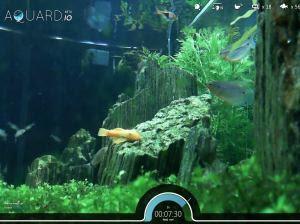 mira los peces en un acuario real