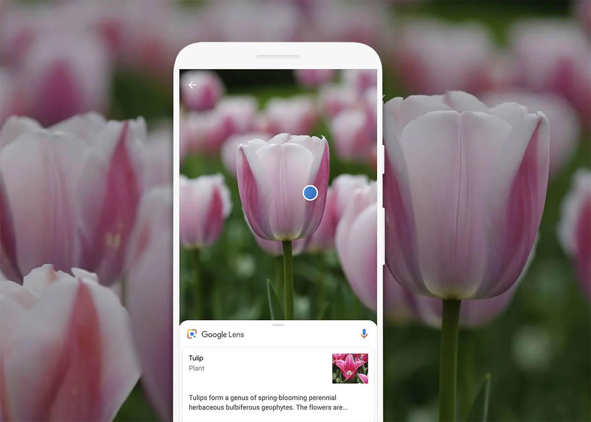 las mejores aplicaciones de reconocimiento de plantas y flores para android