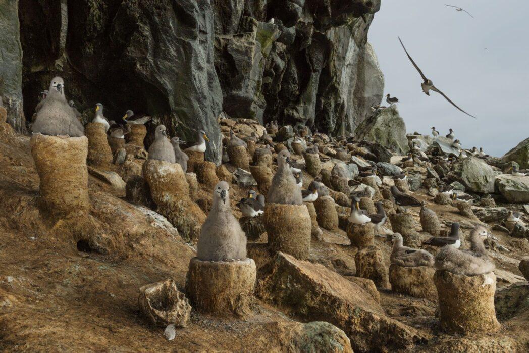 cruce de animales nuevos horizontes la mejor manera de adentrarse en las rocas